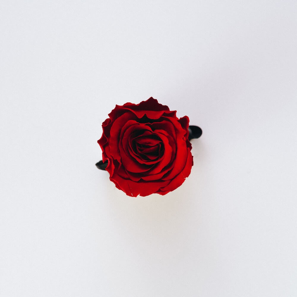 Gül, Rose