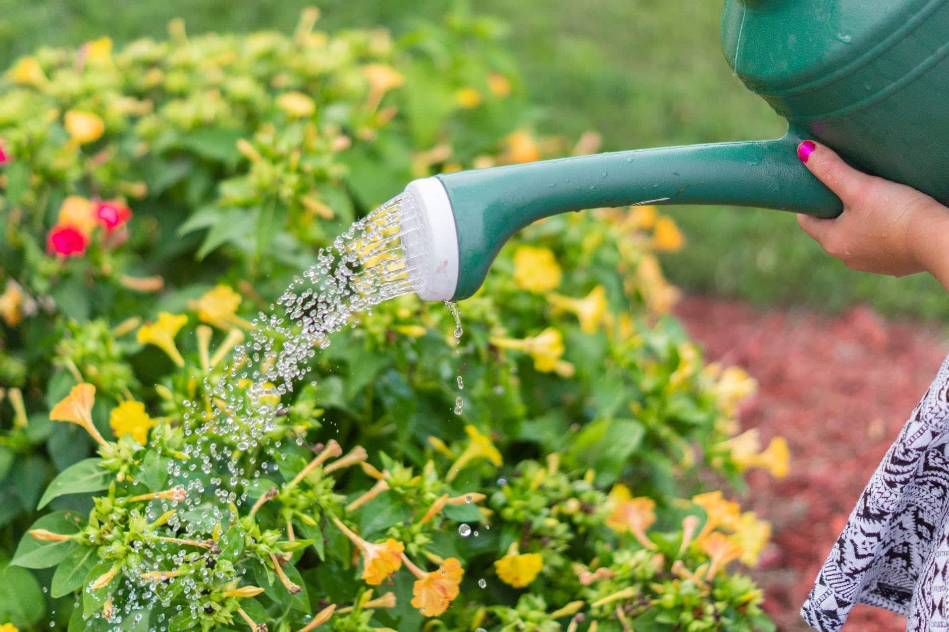 çiçek sulama, flower watering