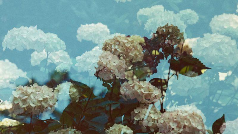 çiçek-tabloları