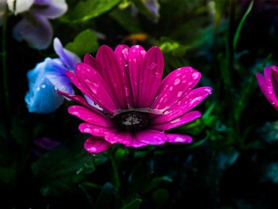 çiçek-tabloları-nelerdir-nasıl-yapılır