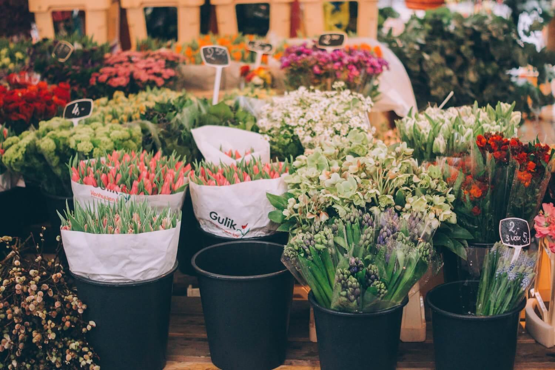 Orkide Fiyatları, orchid prices