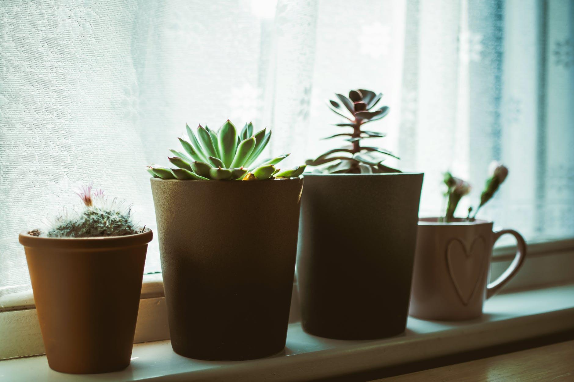 evde çiçek bakımı, flower care