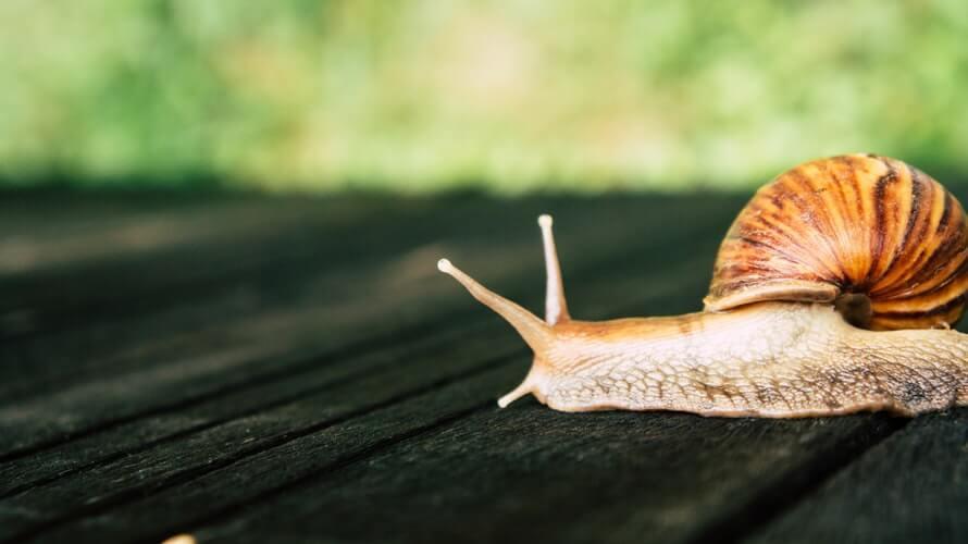 Salyangoz, snail