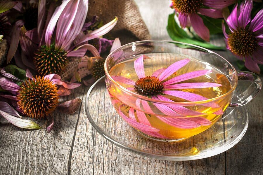 Ekinezya Çayı, echinacea tea