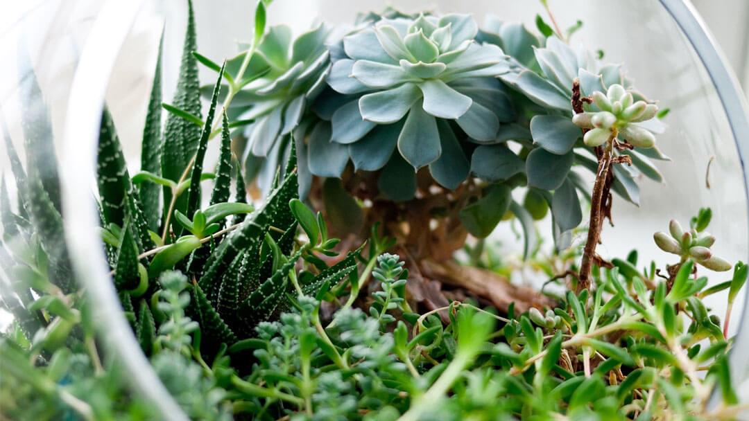 teraryum-bitkileri-bakimi