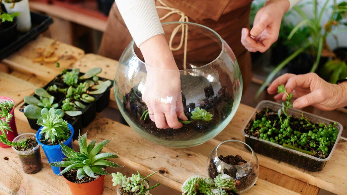 teraryum-bitkileri-nelerdir