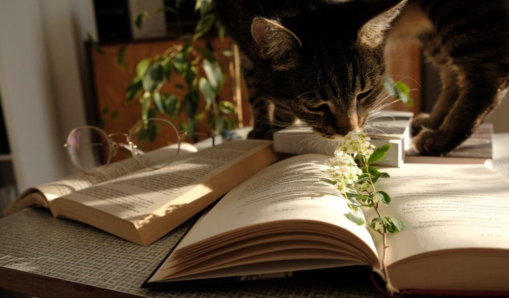 en-iyi-5-kitapli-hediye-seti-ve-hediyelik-kitap-onerileri
