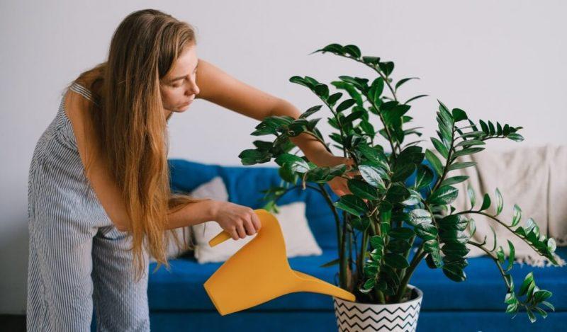 evde-bitki-bakimi-puf-noktalari