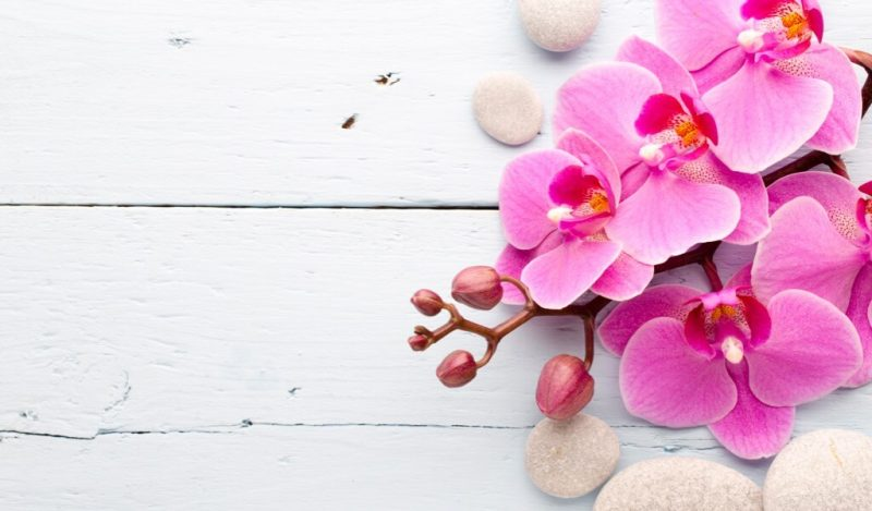 fusya-orkide
