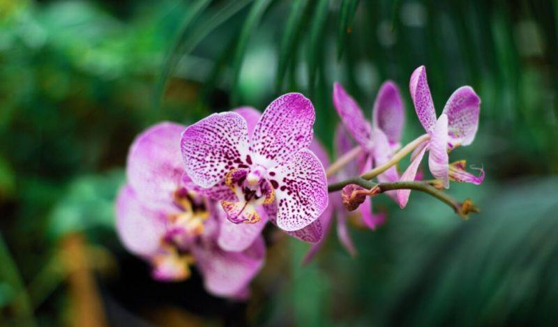 orkide-cicegi-muhiku