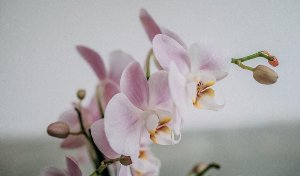 orkide-cicegi-orkideye-dair-her-sey