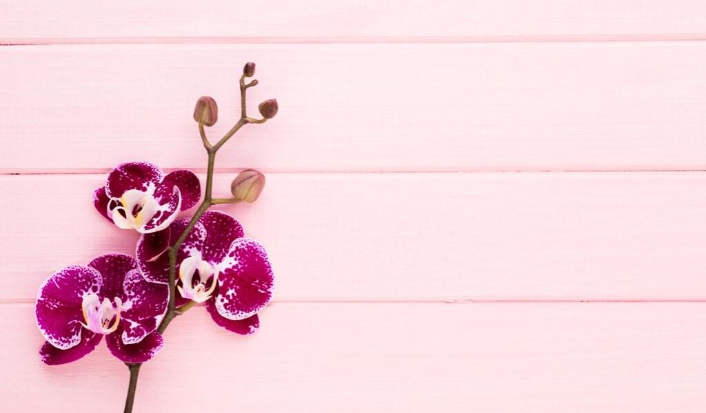 orkide-ciceginin-anlami-nedir