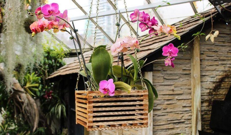 orkide-ciceginin-bulundugu-ortam-nasil-olmali