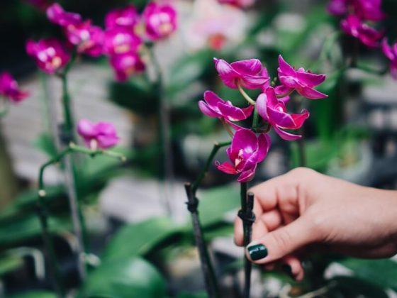 orkide-nasil-cicek-actirilir-ve-nasil-cogaltilir
