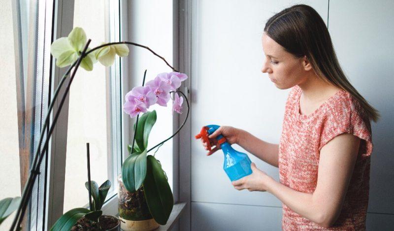 orkide-sulama