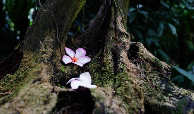 orkidenin-efsanesi