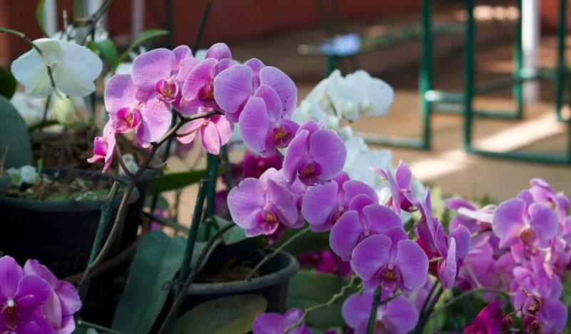 orkidenin-ozellikleri-ve-turleri